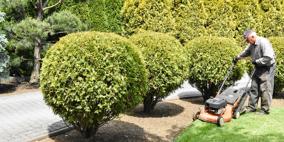 Pielęgnacja trawników naprywatnej posesji